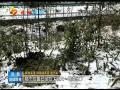 秦岭精灵雪天下山觅食