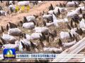 """府谷:羊肚菌种出好""""钱景"""""""
