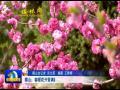 横山:春暖花开香满园