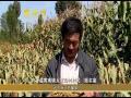 中国农民丰收节:瓜果满园粮满仓